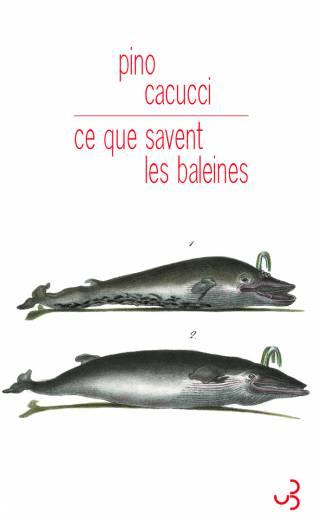 Cacucci - Ce que savent les baleines